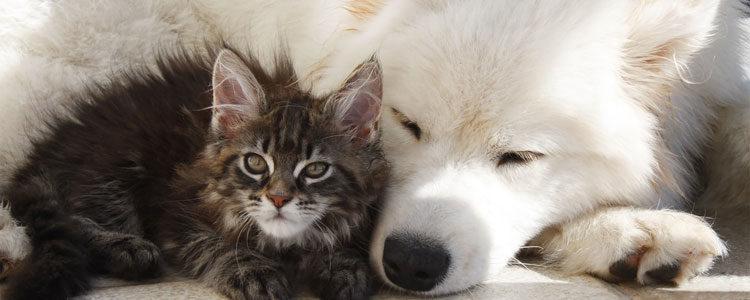 Cani e gatti, due linguaggi diversi