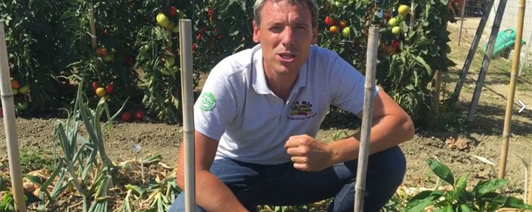 Coltivare al meglio il peperone