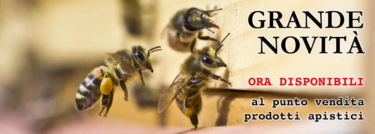Il meraviglioso mondo delle api